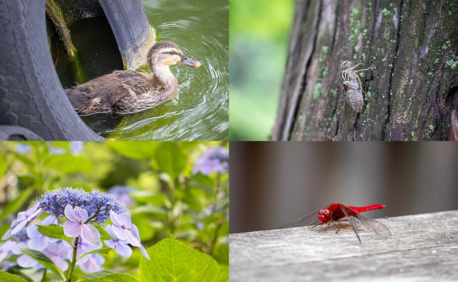 「小さな自然の写し方」という本を読んで撮影した写真を紹介します